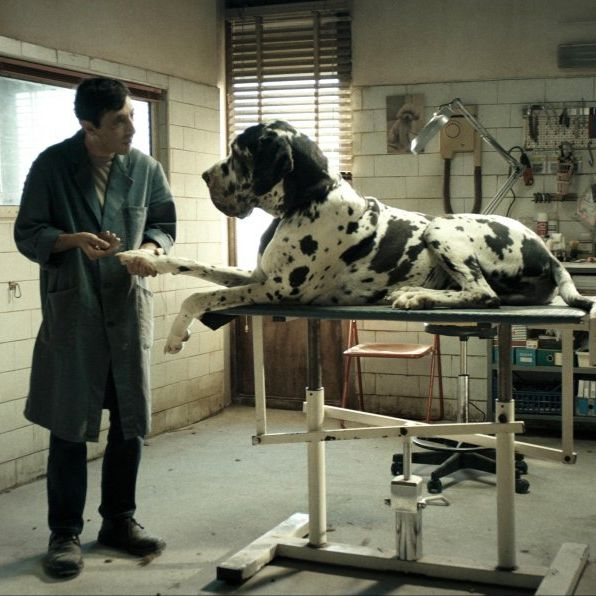 Photo of a big dog from an Italian film.